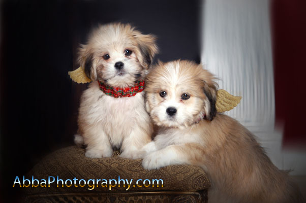 Pets photography in Orlando, Florida